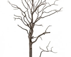 deadtree15082802