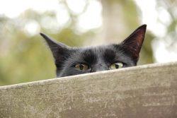 cat19032801