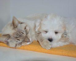catdog20012102