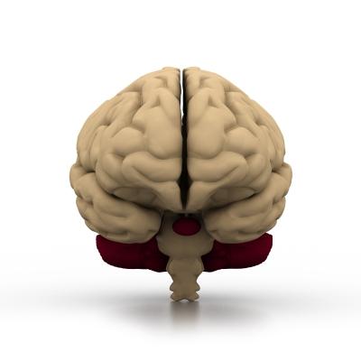 brain0923